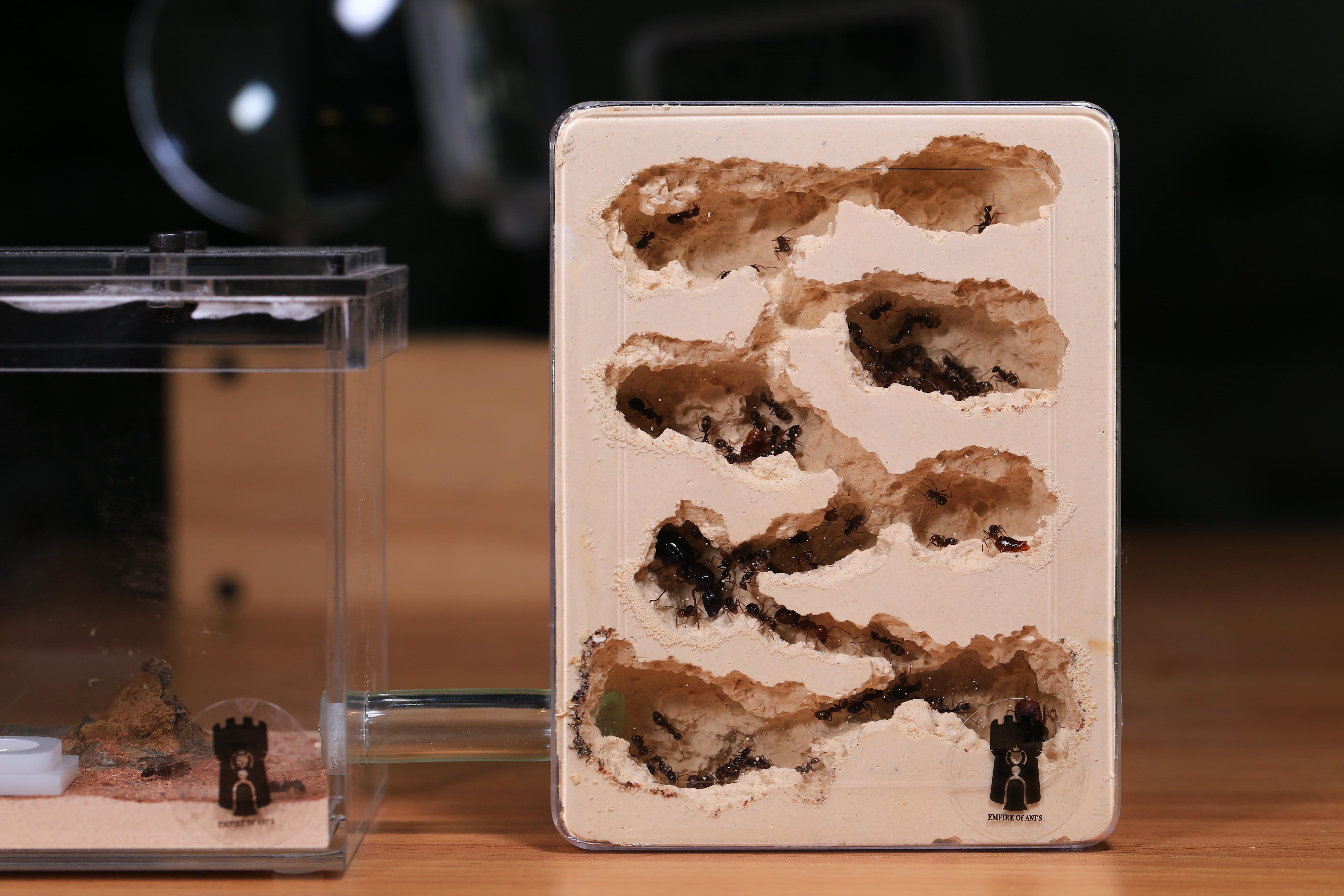 小型直立石膏巢-岩穴